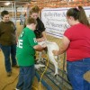 Jessica Hamilton, Richmond County 4-H Club Leader and Volunteer, along with teen volunteers and Richmond County 4-H Livestock Club members, Brianna and Abigail Hamilton, educate local youth about caring for a farm animal.