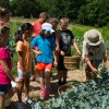 Junior Chefs help farmer Cathy Jones harvest broccoli at Perry-winkle Farm