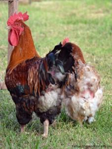 Photo: www.hobbyfarms.com