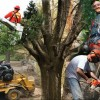 How-To-Hire-A-Tree-Care-Professional-SQ
