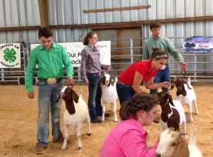 Coleman Berry and Jordan Carroll take top honors at the recent Randolph Co. goat show.