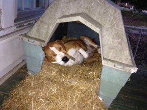 January 2016 Shayla doghouse