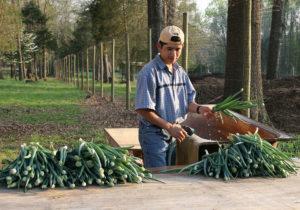 Cover photo for Register Now for Extension's Postharvest Handling Workshop for Farmers