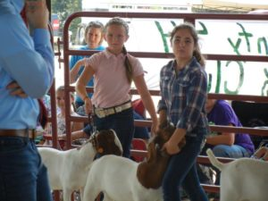 Cover photo for 4-H Farm Credit Showmanship Circuit