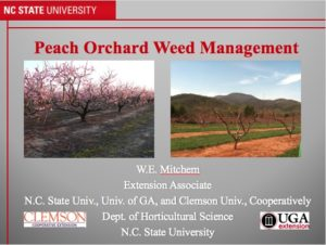 Cover photo for Fall Is the Best Time to Begin Orchard Weed Control