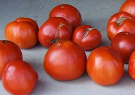 Cover photo for Extension@YourService: Take the Tomato Challenge