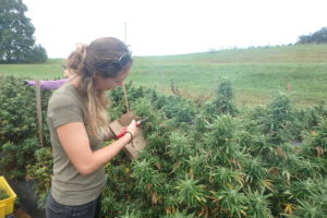 Cover photo for Industrial Hemp Workshop in Durham on Friday (Nov 9)